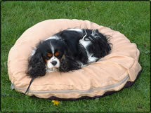 Memory Foam Pet Beds &amp; Loungers-orthopaedic <em>From &pound;24.99</em>